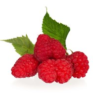 Raspberry Seed Oil Expressed