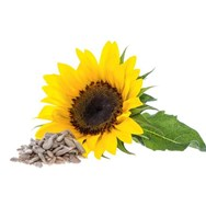Sunflower Oil Certified Organic
