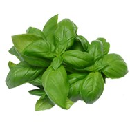 Basil (Methyl Chavicol) Essential Oil