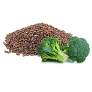Broccoli Seed Oil Expressed Certified Organic