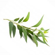 Eucalyptus Peppermint Essential Oil